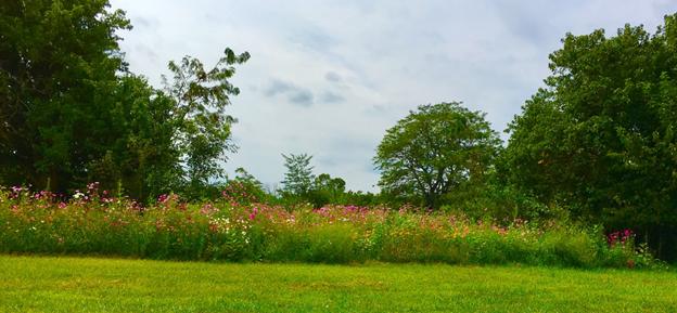 Karen's wildflower meadow